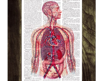 Summer Sale Blood - Human Veins and arteries Circulatory System - Dictionary Book Page Print on Upcycled Book Page SKA028