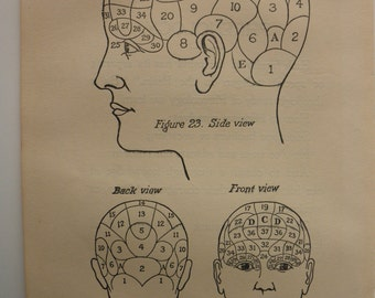 6 original pages - 1905 MEDICAL CHART from antique medical book - brain, phrenology