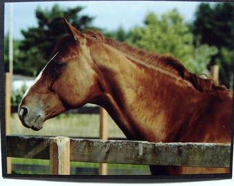 Chestnut Sorrel Brown Horse Profile Picture Card
