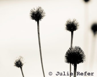 Nature Photography Botanical Art Minimal Nature Print, Winter Flower, Neutral Decor
