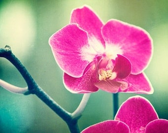 """Orchid Photography - flower pink purple green violet teal nature floral print modern wall art photo 10x10, 8x8 Photograph, """"Orchid Blossom"""""""