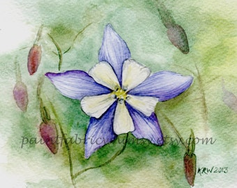 Original Watercolor Collectible - Blue Columbine - Matted 5 x 7