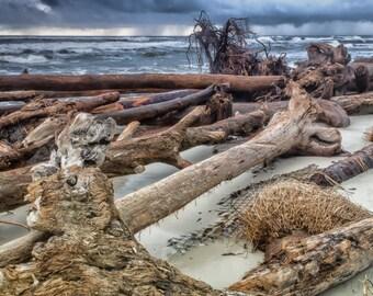 wall art, home decor, tropical storm, trees, gulf of mexico, driftwood, hurricane, ocean, waves - Falling Down