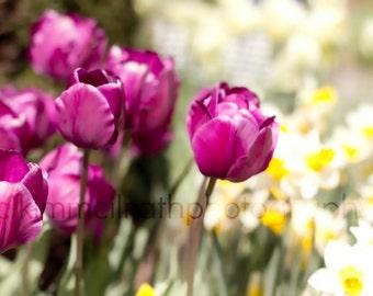 Digital Download - Vibrant Spring Tulips