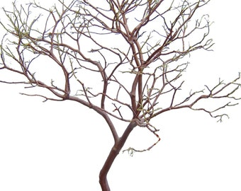"Manzanita Branches 2-pack  28"" Tall, Premium Centerpieces,  Weddings, Floral, Crafts"
