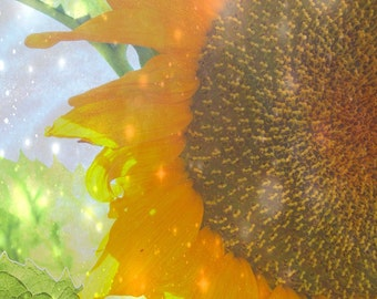 Glistening Bright Sunflower photograph summer garden floral botanical fairy light