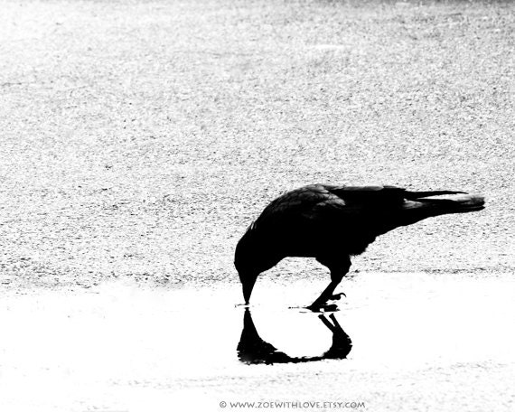 Crow Photography - Halloween Wall Art - Raven Photo -  Black and White - Scary Spooky Horror Macabre - Unique Fine Art Photography