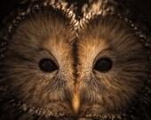 owl print, owl face, owl photography, owl eyes photo, bird nature wall art, owl home decor, nursery art, office decorations, le chat huant