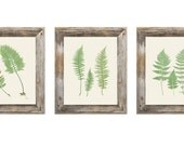 Set of 3 Fern Botanical Prints - 8x10
