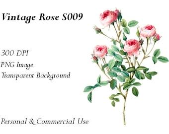 Vintage Rose Clip Art Transparent Png File  S009