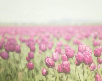 Tulip Photography,  Purple Wall Decor , Flower Picture, Spring Landscape, Feminine Photograph, Big Bedroom Art