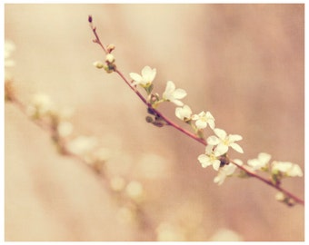 Blush Pink Photograph, fine art photograph, spring flower photo, asian inspired, dreamy airy art, guestroom wall decor