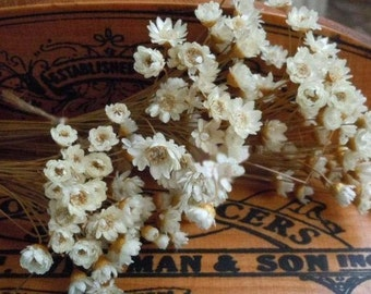 A small pack of dried flower,Filler of the mini glass bottles, the flower about 10mm,by sunshinepark99-white