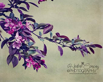 Purple Summer Blossom Lilacs Summer Flowers Instant Download Spring Flowers Texture  Fine Art Photography, Wall Decor