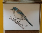 Bird picture or card copy of original