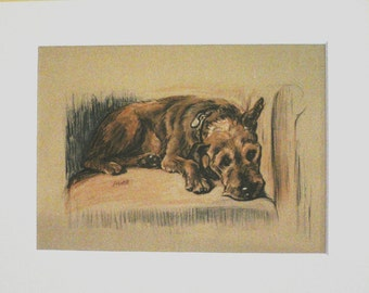 IRISH TERRIER DOG 1936 Lucy Dawson Vintage signed mounted dog plate print Unique gift
