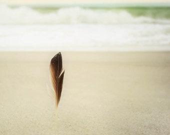 Beach Photo, seaside, shore decor, Feather Image Tan, Brown, ocean print, Jersey Shore