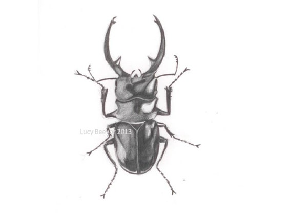 Stag Beetle Original Drawing in Pencil by CaughtByTheLight on Etsy