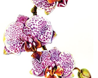 Orchid, Spotty Dotty, 10 for 10.00