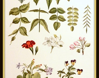 Vintage Botanical Print, 'Leaves and Blossoms' Botanical Print, Vintage Floral Art Print, Collectible Print, Country Cottage Decor, 1948