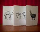Beasts of Burden - 3 folding cards w/ envelopes - A6 - camel, llama, donkey - blank inside