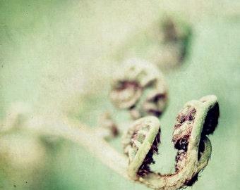 Fiddle Head Fern Photograph, Green, Soft focus, Nature photography, zen