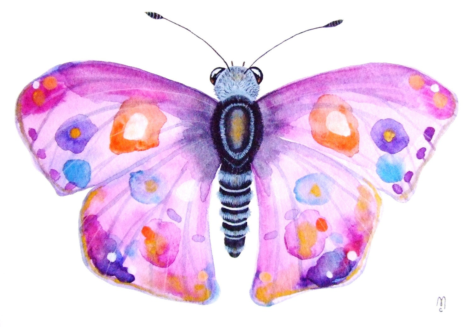 Butterfly Watercolor Painting Original Ink Insect Animal - photo#37