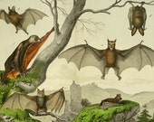 1886 Antique BAT lithograph. BATS. VAMPIRES. 129 years old gorgeous large size print.