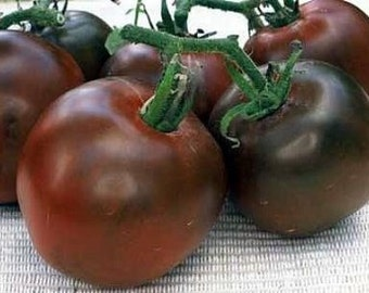 Black Russian Heirloom Tomato Seeds Rare Non GMO Clearance Sale