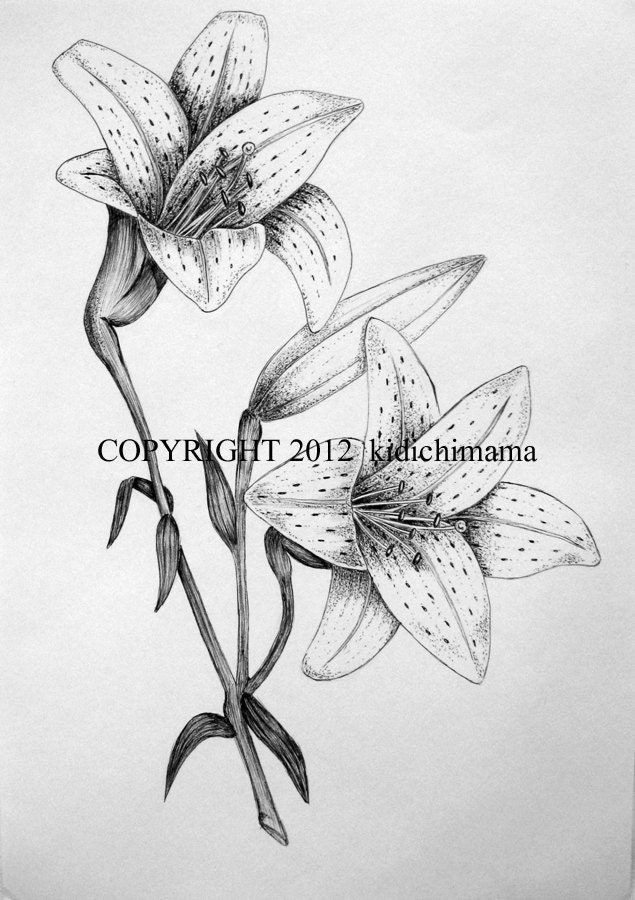 Original pen and ink tiger lily drawing on white paper