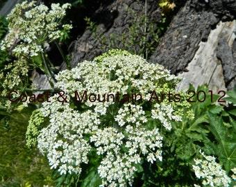 Wildflower Photo Card