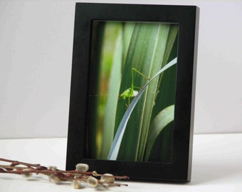 nature photography, grasshopper photograph, insect photography, 4x6 or 5x7 print