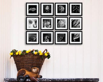 Gallery wall Black and white photography, Macro Art prints, flower, leaf, dandelion, daisy, interior design, wall art, french wall decor