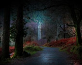 Dark Forest Irish Landscape Photography Ireland Woodland Fairy Tale Home Decor Print Glendalough/Wicklow Picture Print