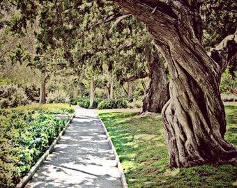 "Photograph ""Garden Path""- 8x10, Print Only"