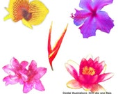 Clip Art, Digital Illustrations, Drawings, High Res, Royalty Free, Exotic Flowers
