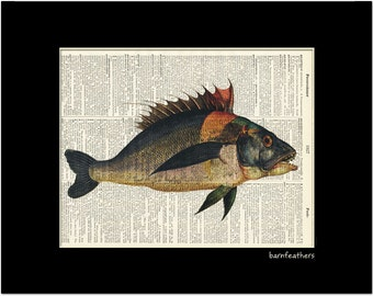 Dictionary Art Fish Print vintage dictionary page book art print No.P126