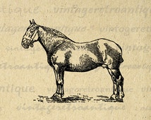 Suffolk Mare Horse Image Digital Graphic Illustration Download Printable Antique Clip Art for Transfers etc HQ 300dpi No.3462