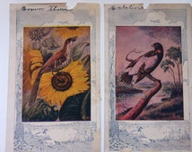 Vintage 1940's - Schulze's Butter Nut Bread - Bird Collectible Cards