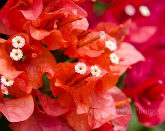 Red Orange Flowers Photography Home Decor
