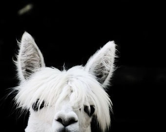 Peek'a Boo - Alpaca Photograph - Nursery Art - Kid's Room Decor - Wall Decor - Animal Photograph