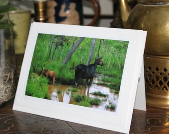 4/pack blank greeting cards. Features print of original photography by Elsa K Black.  Moose and Calf, Algonquin Park, Ontario.