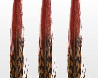 "Red Tip Golden Pheasant Feathers.  6/8"" (15-20cm) .  UK Supplier"