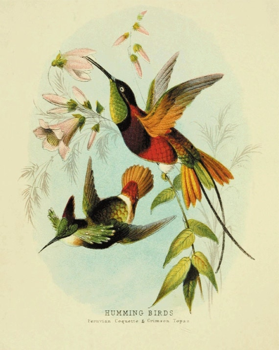 Wall Art Flowers And Birds : Hummingbirds art vintage bird print nature