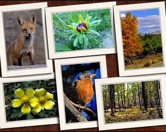 6 Nature Photo Note Cards - Nature Note Cards - 5x7 Nature Cards - Blank Nature Greeting Cards (GP101)