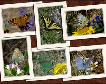 6 Butterfly Photo Note Cards - Butterfly Note Cards - 5x7 Butterfly Cards - Blank Note Cards - Butterfly Greeting Cards (GP58)