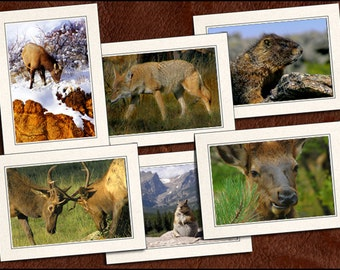 6 Wildlife Photo Note Cards - Wildlife Note Cards - 5x7 Wildlife Cards - Blank Wildlife Cards - Wildlife Greeting Cards (GP82)