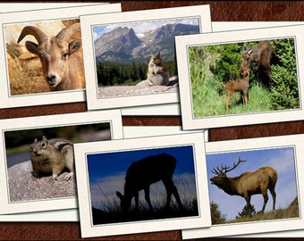 6 Wildlife Photo Note Card Set - 5x7 Wildlife Note Cards With Envelopes - Blank Note Cards - Photo Greeting Cards Handmade (GP68)