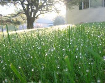 Morning Dew Photography Print