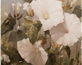 Super Giclée's of  Big flower paintings bindweed opus IV